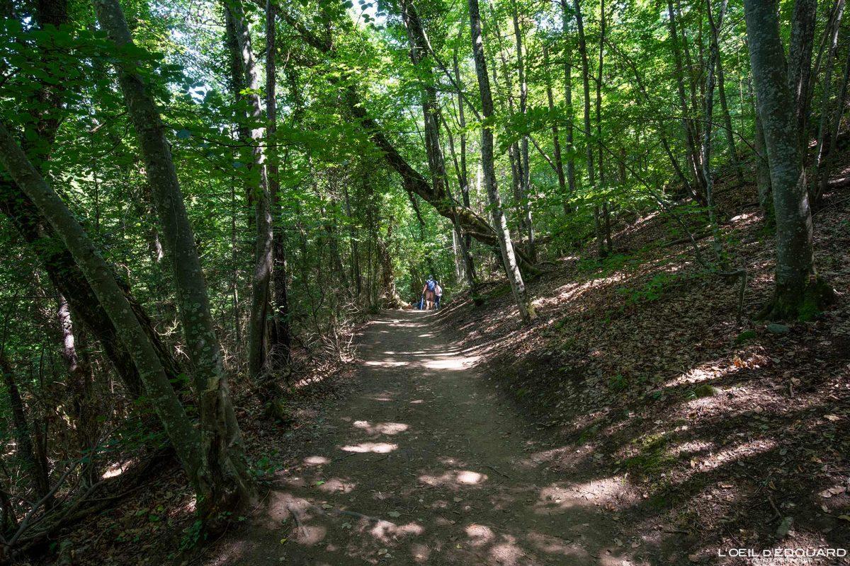 Sentier randonnée Passerelles Himalayennes Lac de Monteynard Avignonet Trièves Isère Alpes France Paysage Forêt Outdoor French Alps Forest Landscape Hiking Trail Hike