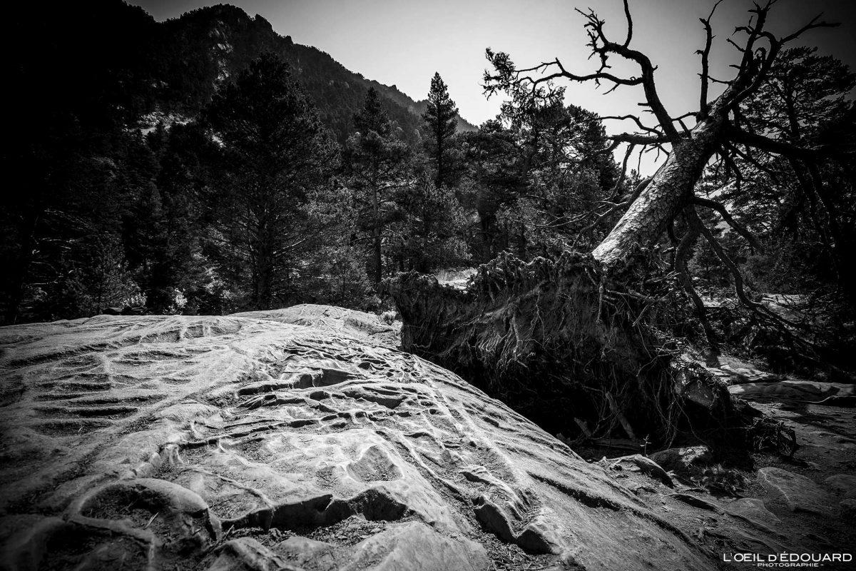 Sentier randonnée Lac de Gaube Cauterets Pyrénées France Montagne Forêt Outdoor Hiking Trail Hike Mountain Forest Dead Tree Black and White Photography