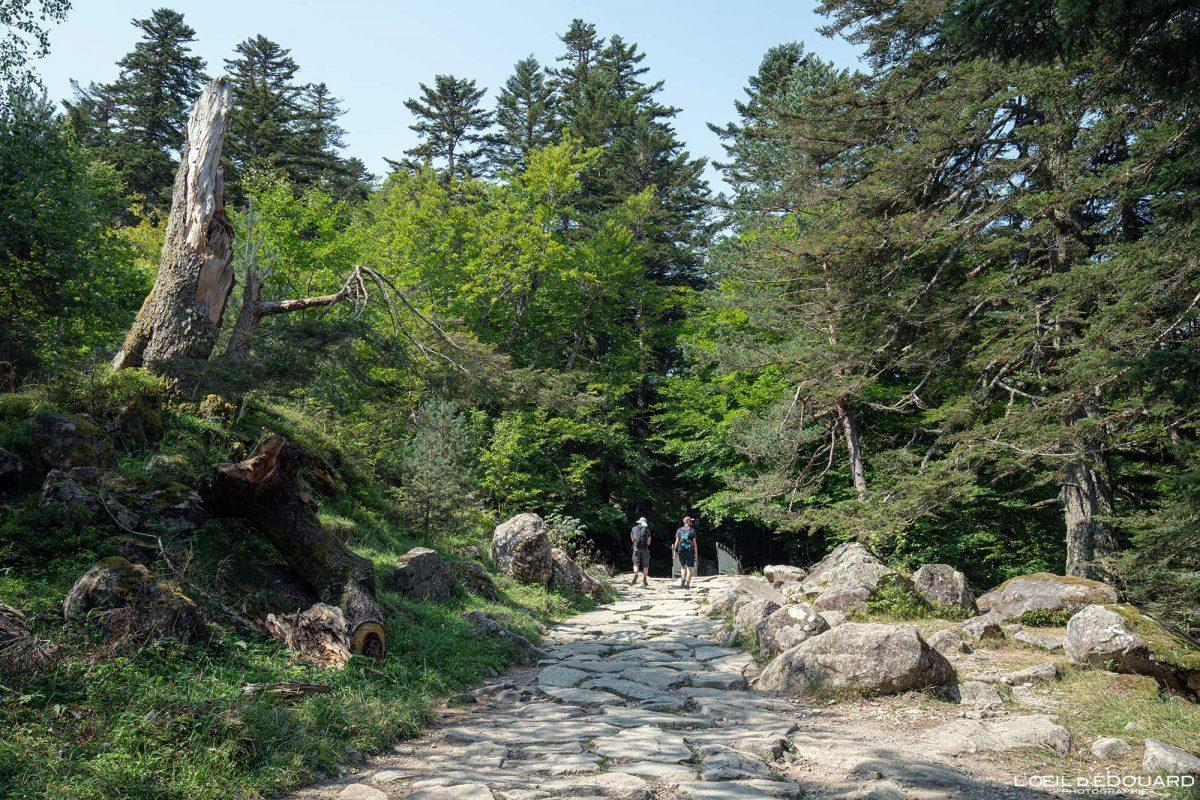 Sentier randonnée Pont d'Espagne Cauterets Pyrénées France Outdoor Hiking Trail Hike Forest Landscape