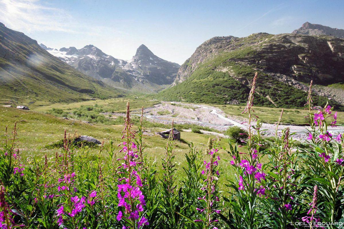 Épilobes et Ruisseau de la Reculaz Haute-Maurienne Savoie Alpes Grées France Paysage Montagne Outdoor French Alps River Mountain Flowers Landscape
