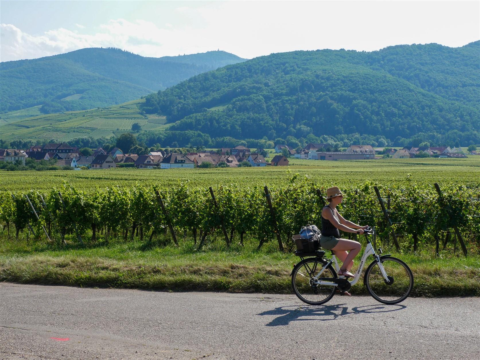 Moi...sur un vélo au milieu du vignoble alsacien